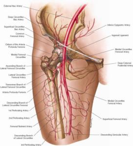 femoralartery